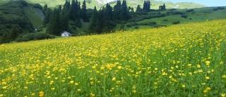 Der Arlberg in voller Blüte